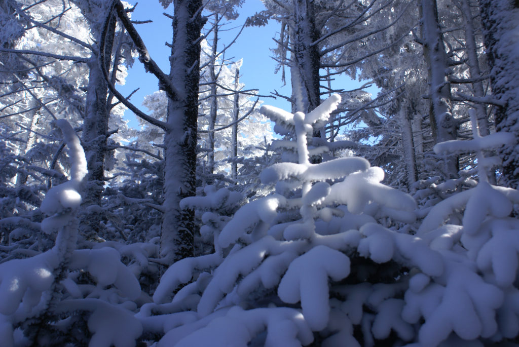 Snow scene on Roan Mountain